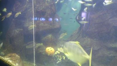 ハロウィン 水族館 上越市