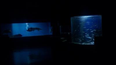 夜の水族博物館