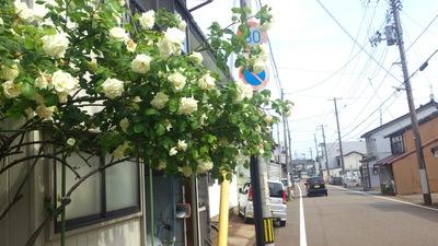 山本味噌本店 バラ