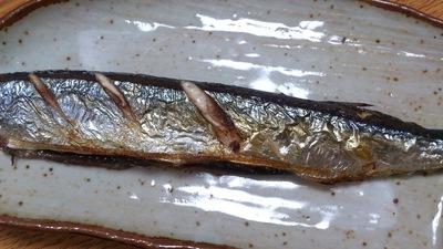 秋刀魚 上越市