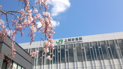 上越妙高駅のしだれ桜