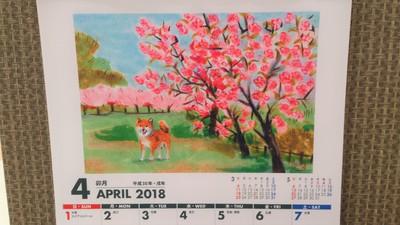 五智の八重桜