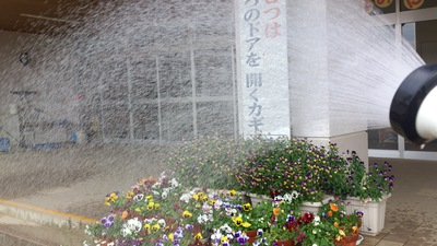 花野水やり