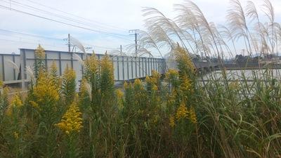 秋 黄色い花