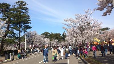 高田公園 百万人観桜会